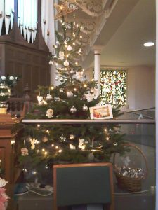 St Columba's Tree
