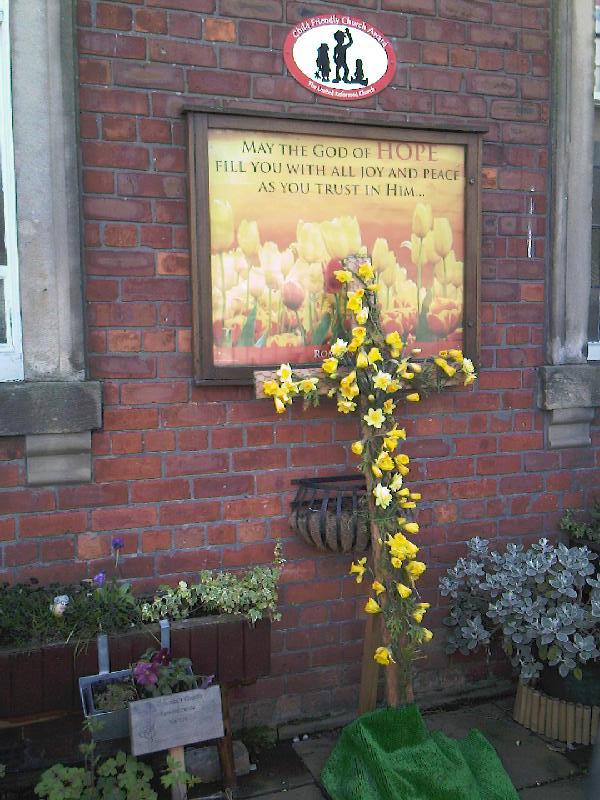 Daffodil cross